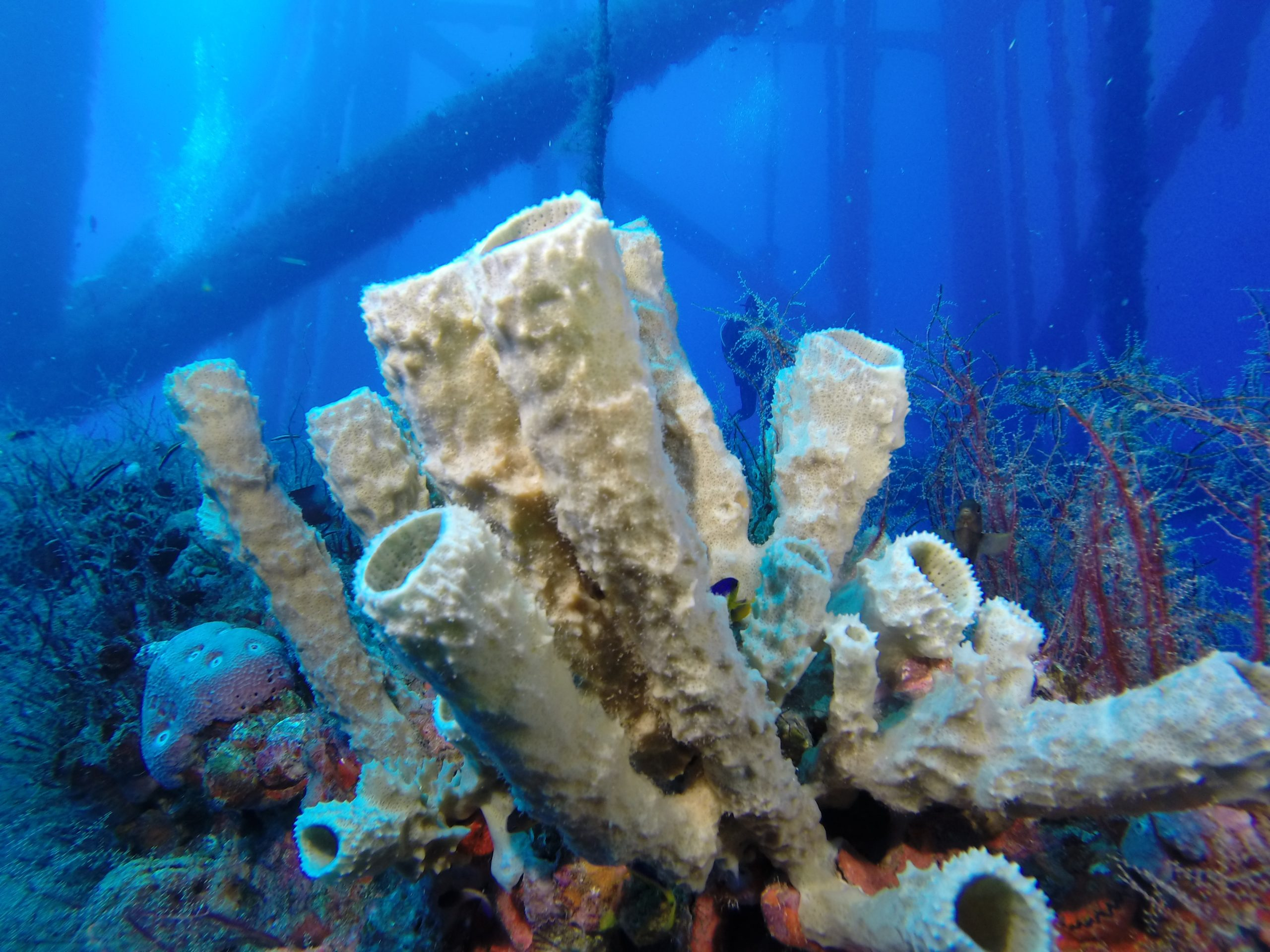 Rigs to Reefs Thailand Feasibility Study