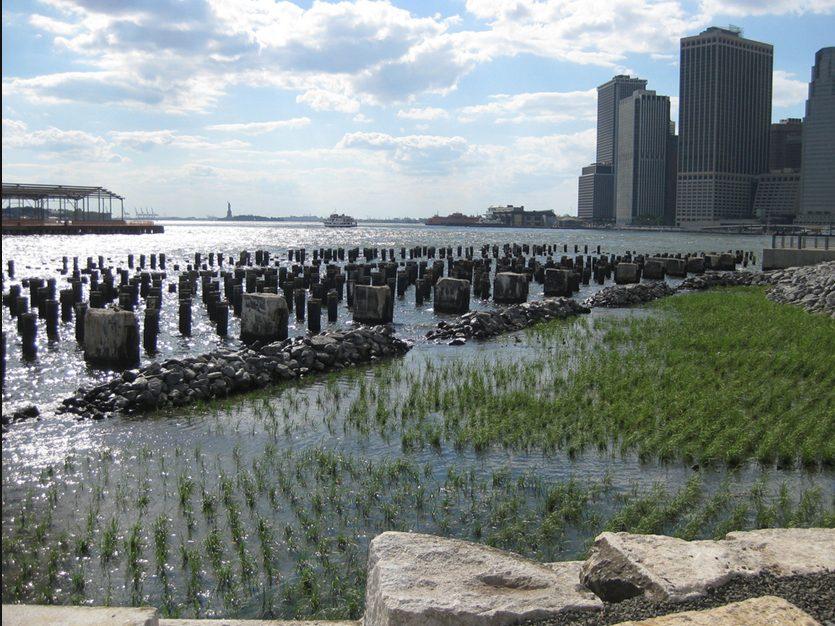 Brooklyn Bridge Park Ecological Design