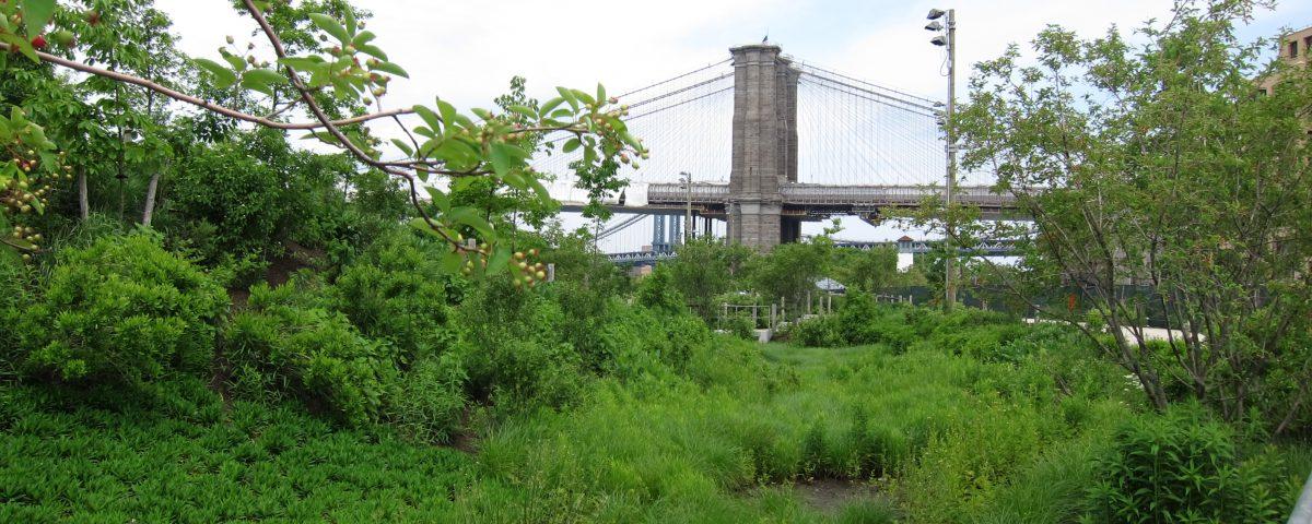 A verdant landscape foregrounding Brooklyn Bridge
