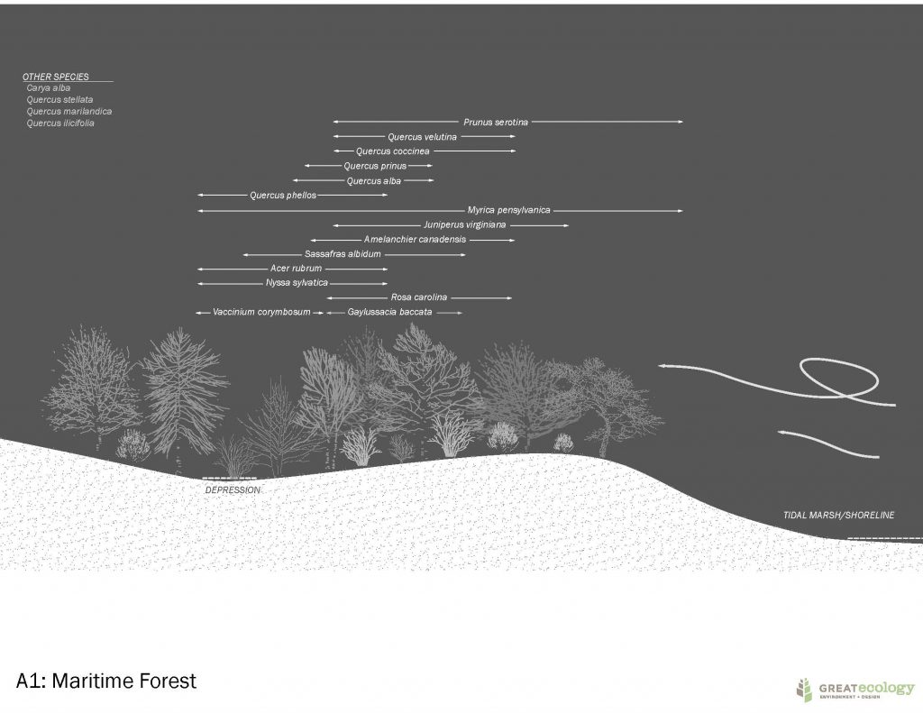 Image demonstratting a maritime forest with prevaling winds, tidal marsh, and a varied landscape