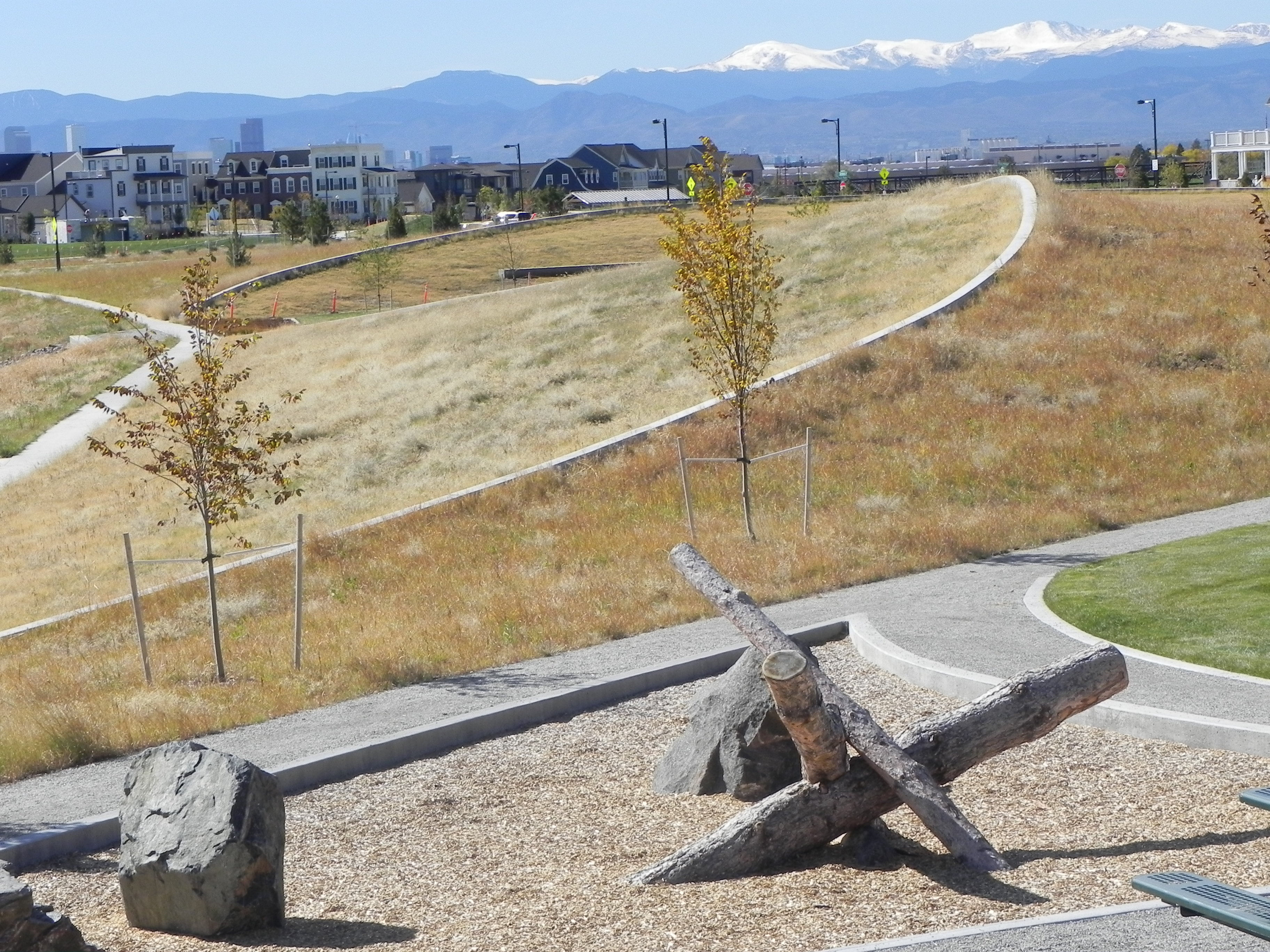 Various native grasses, in a park scape, with a neighborhood in the midground and the Rocky Mountains in the background