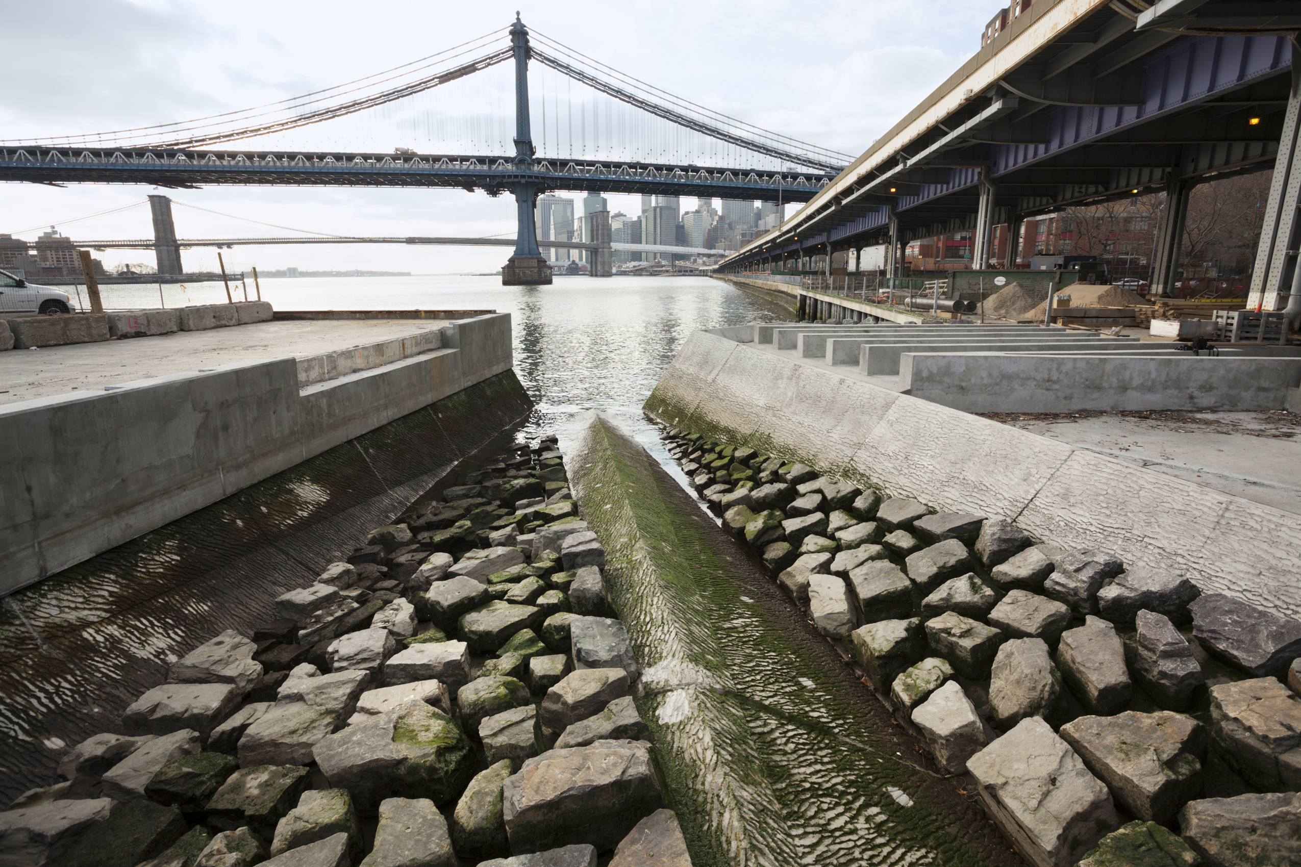 Image of the mussel habitat along the East River, at the East River Waterfront Park