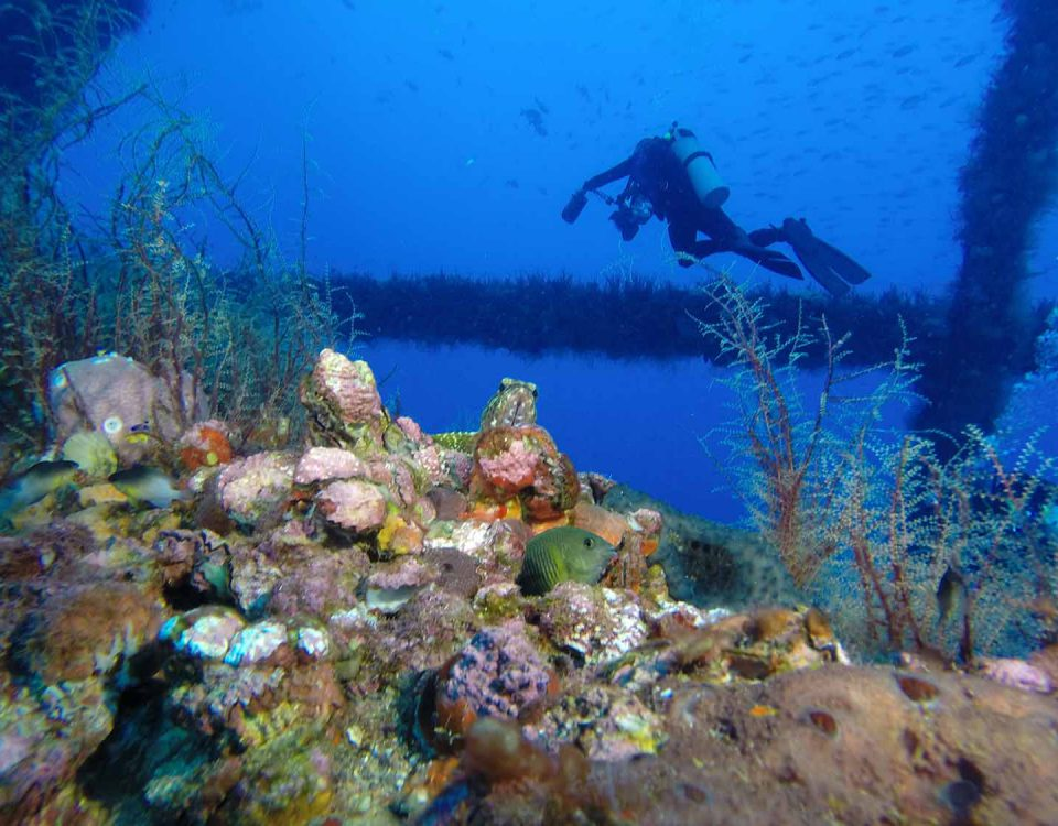 A reef on an oil right with a fish in the center foreground and a diver in the background