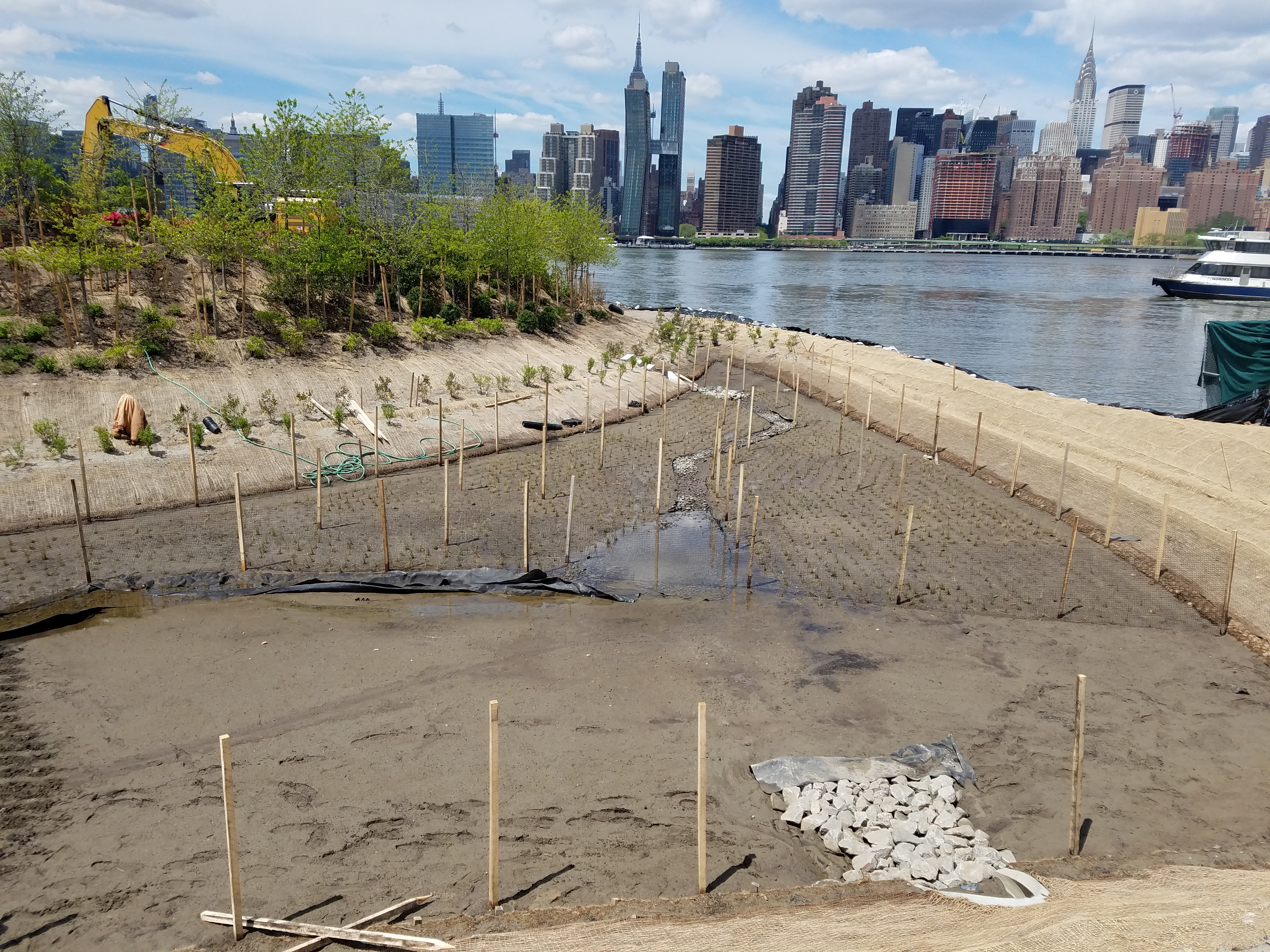 Installation of wetland plants at Hunter's Point South