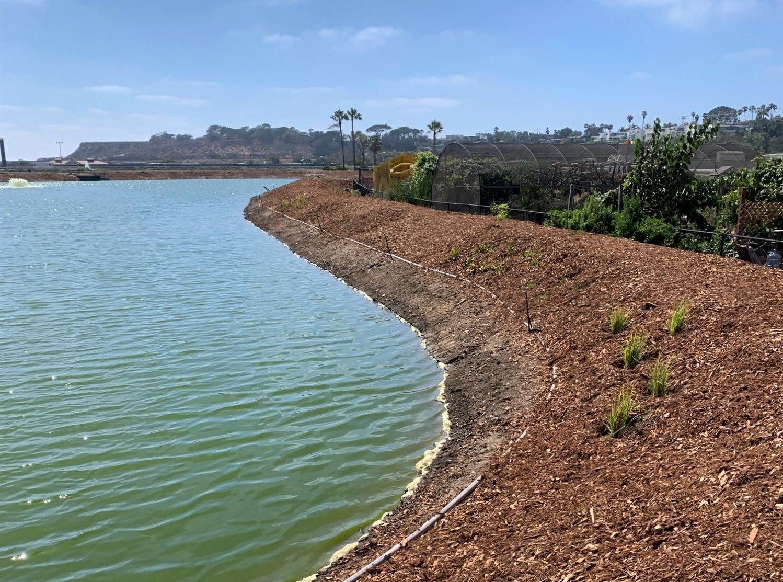 Del Mar Constructed Wetlands Berm