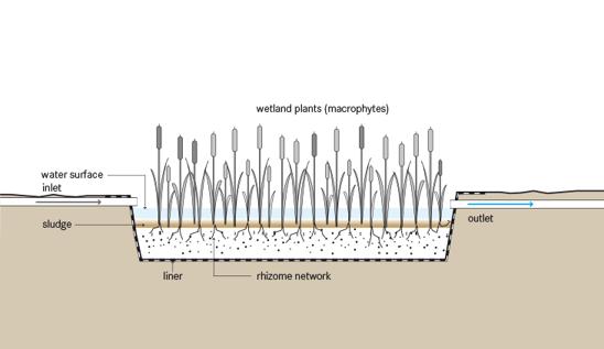 Horizontal Wetland Cross Section