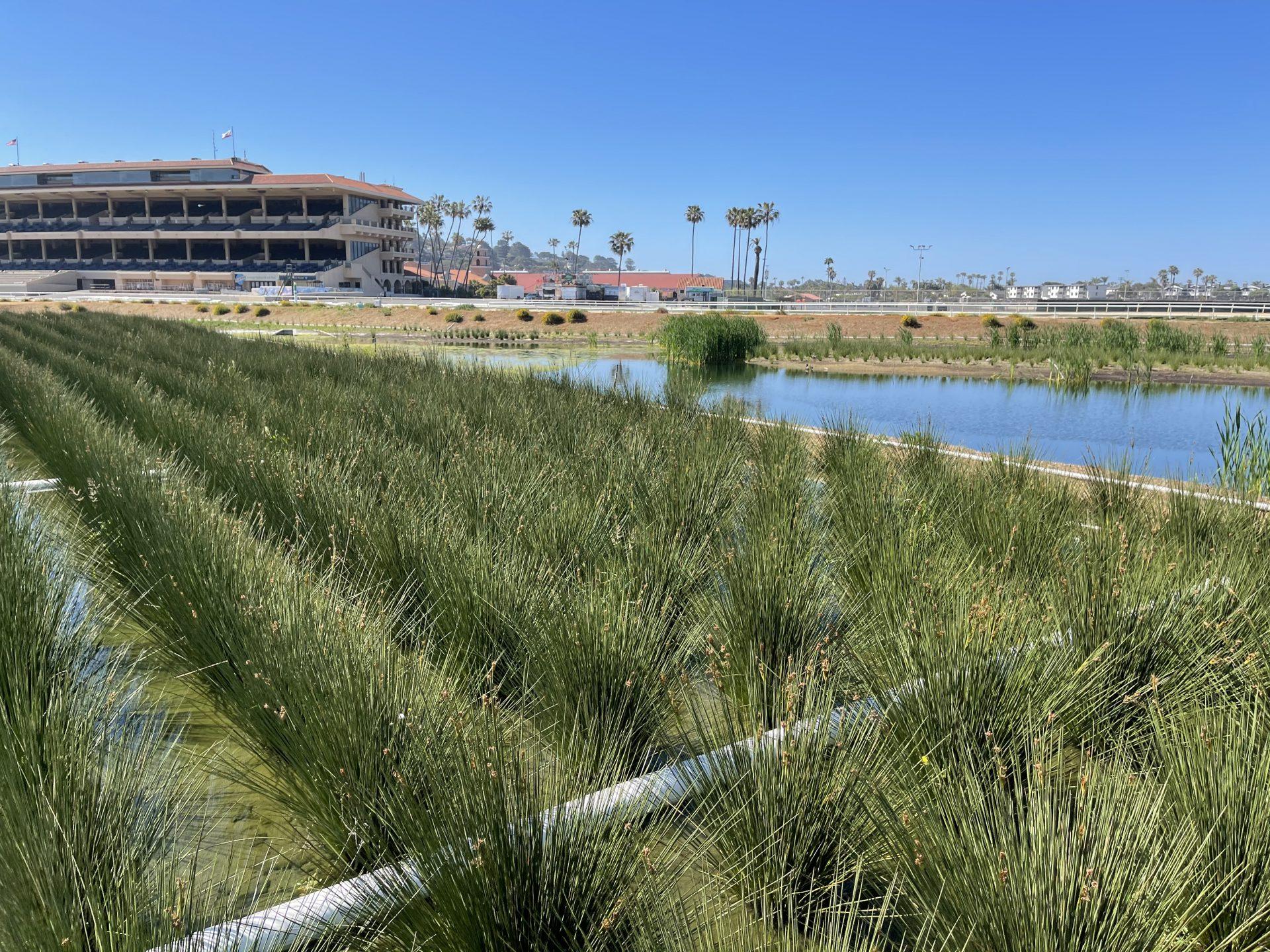 Del Mar Fairgrounds vertical flow treatment wetland