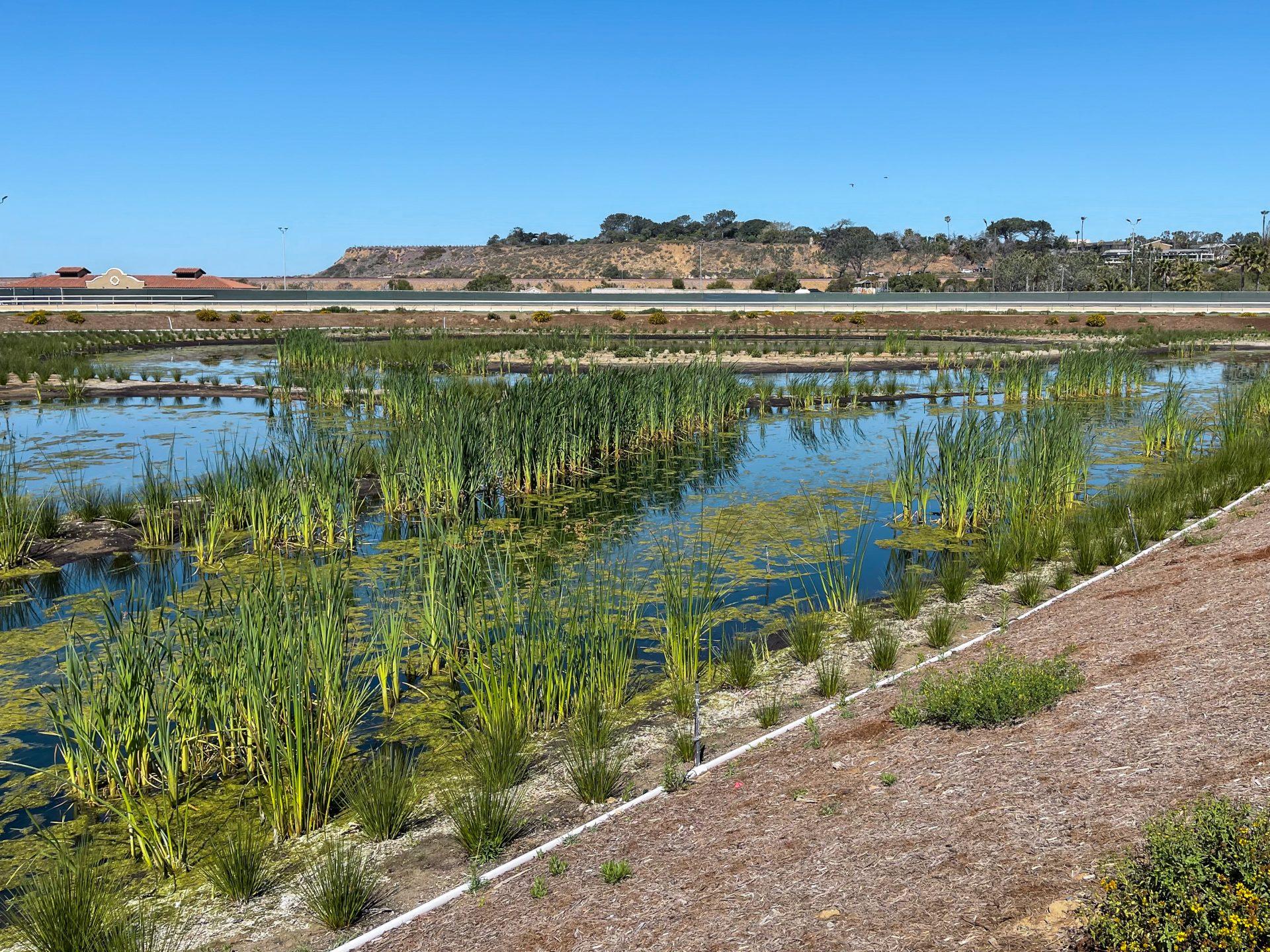 Del Mar Fairgrounds horizontal flow treatment wetland