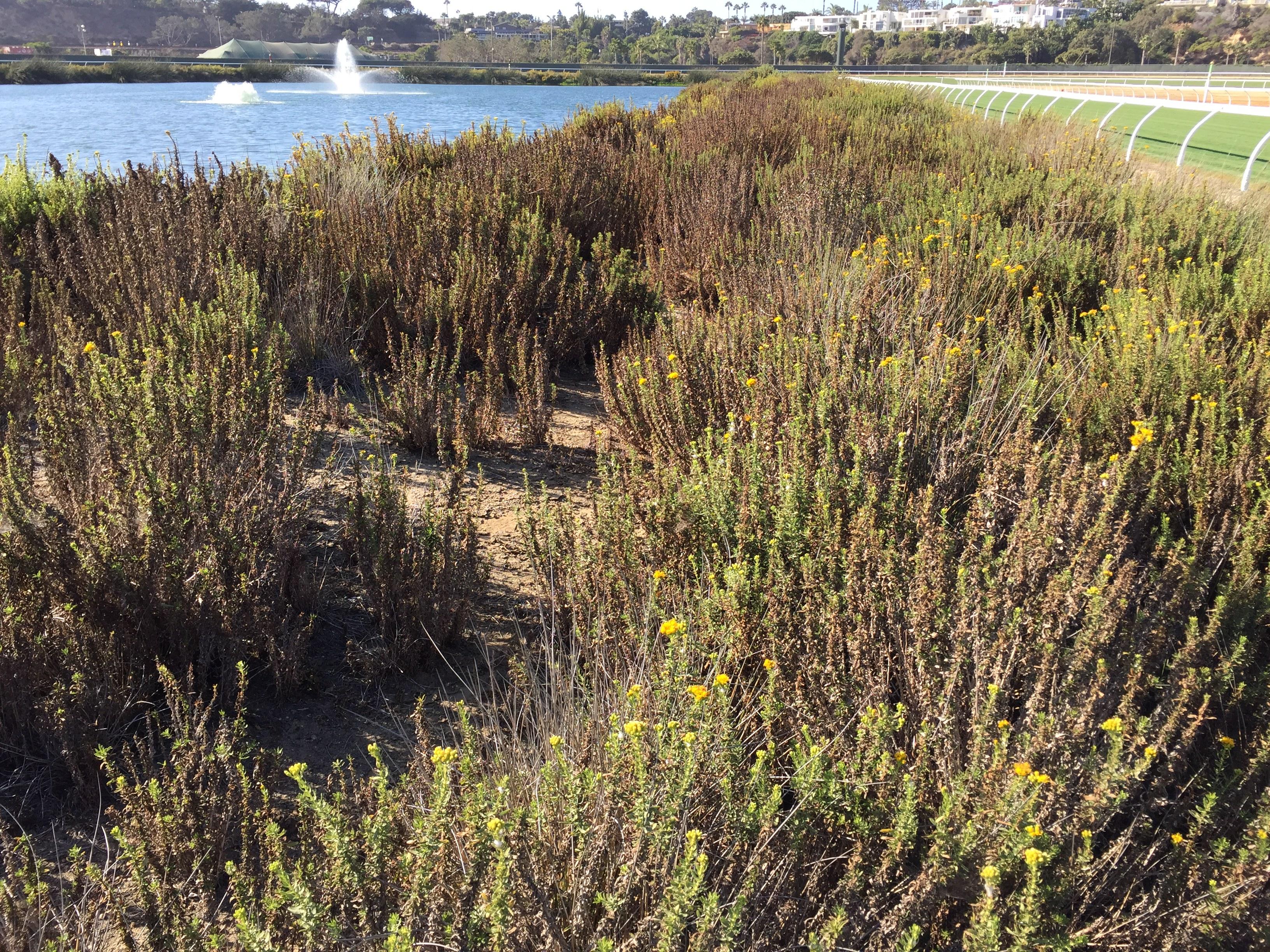 Del Mar Constructed Wetlands