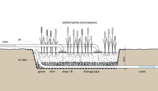Vertical Wetland Cross Section