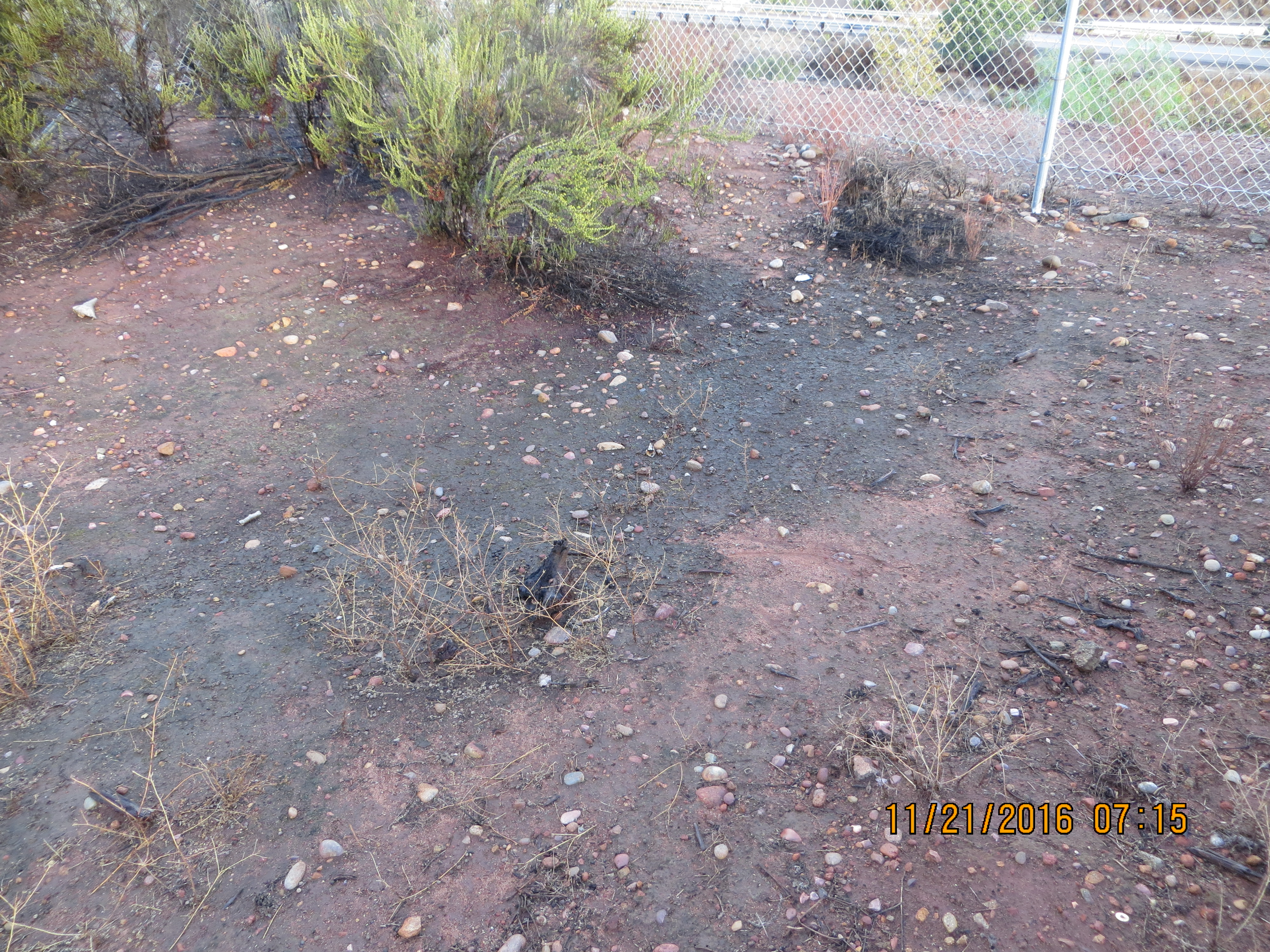 dirt lot with mud and vernal pools