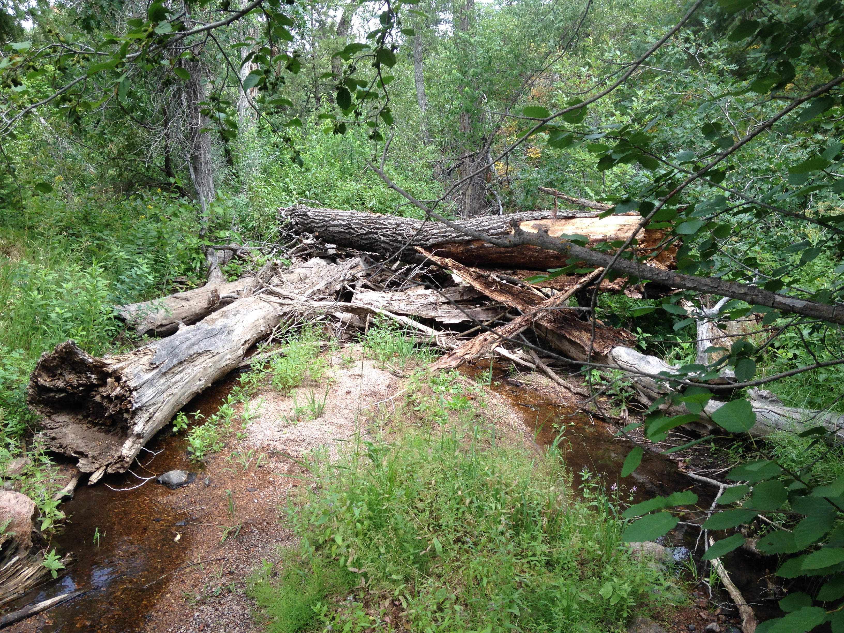 Large woody debris in a creek, surrounded by dense vegetation