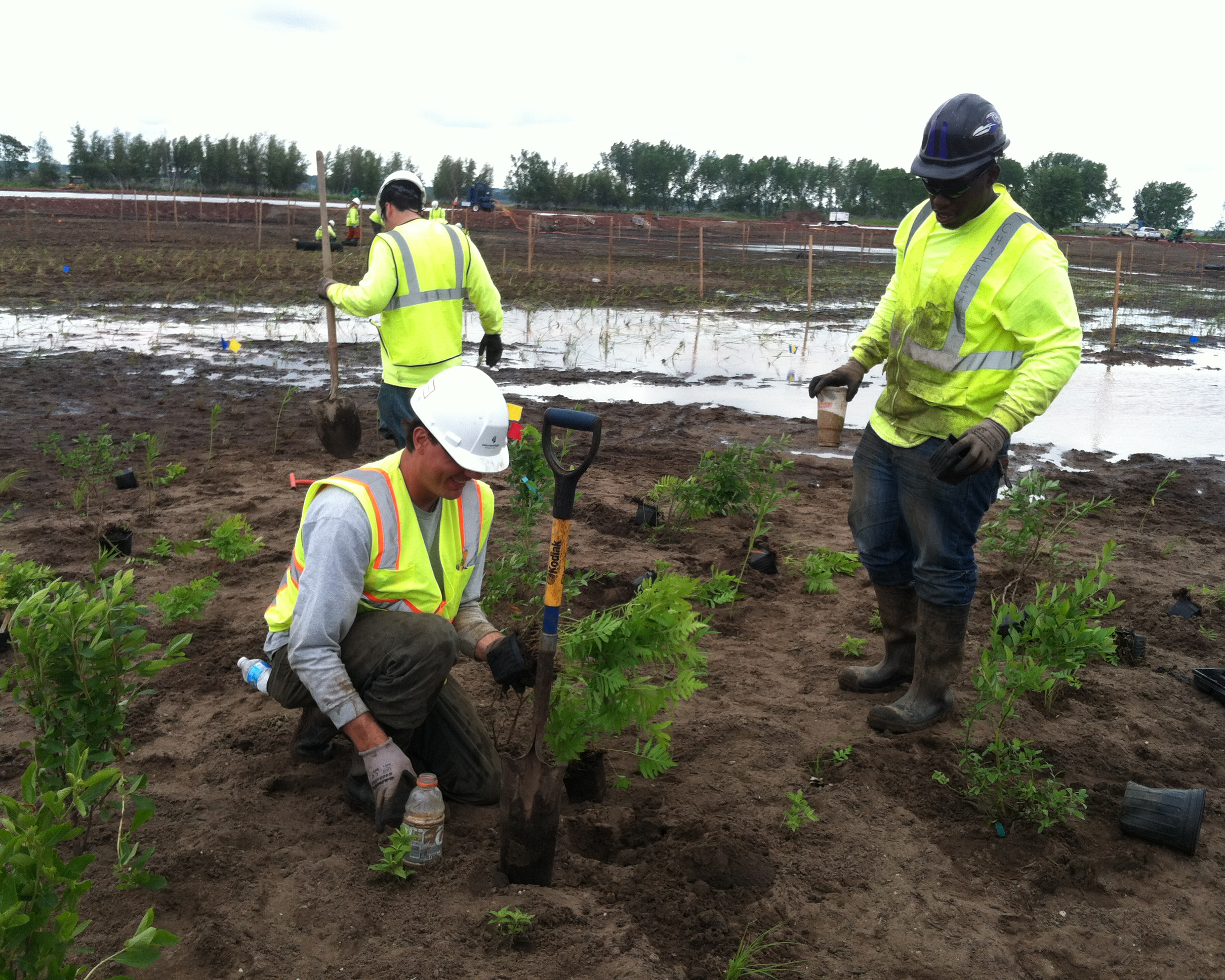 three men in high visibility vests planting plants in a muddy field