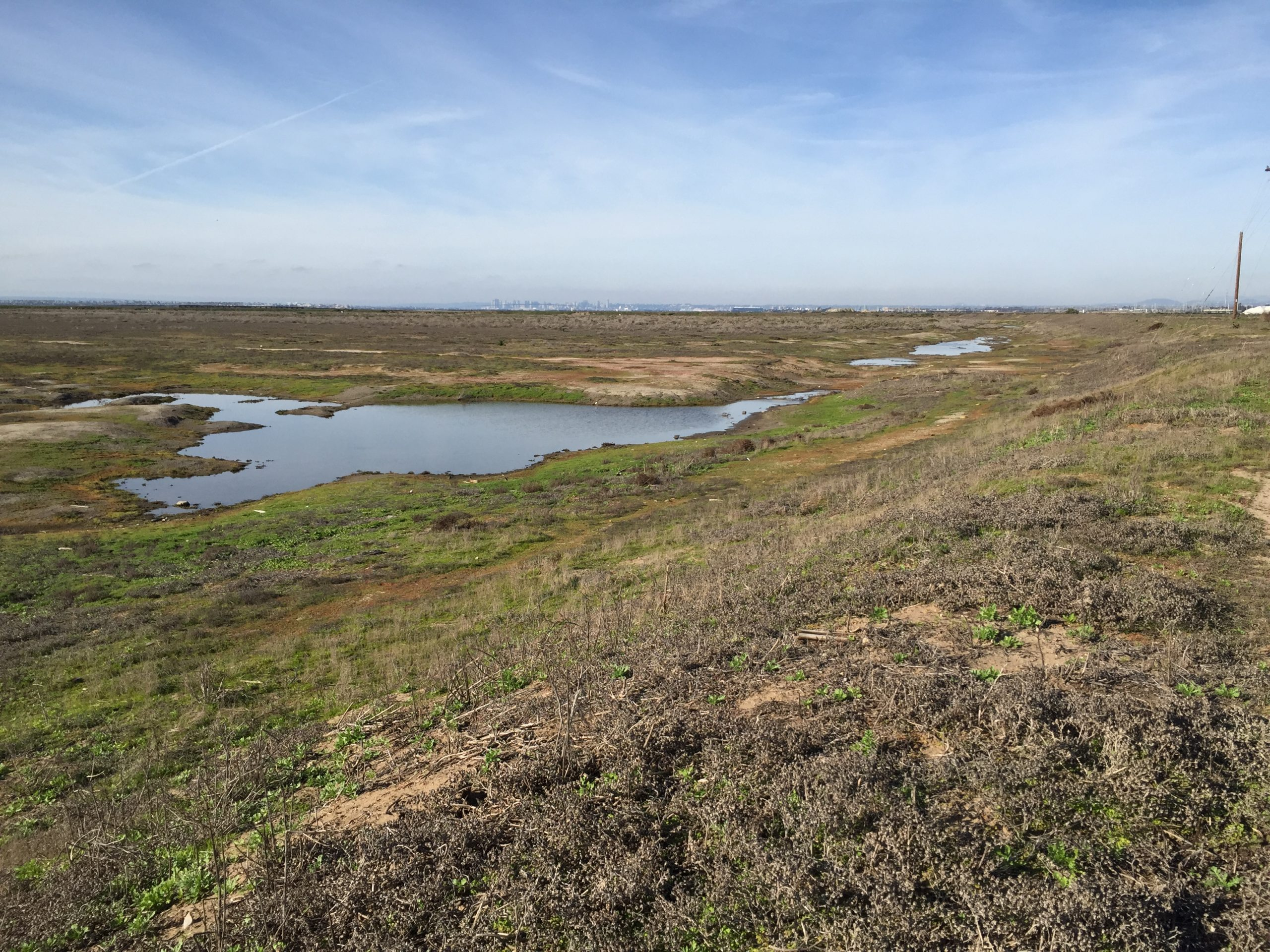 Pond 20 Wetland Mitigation Bank