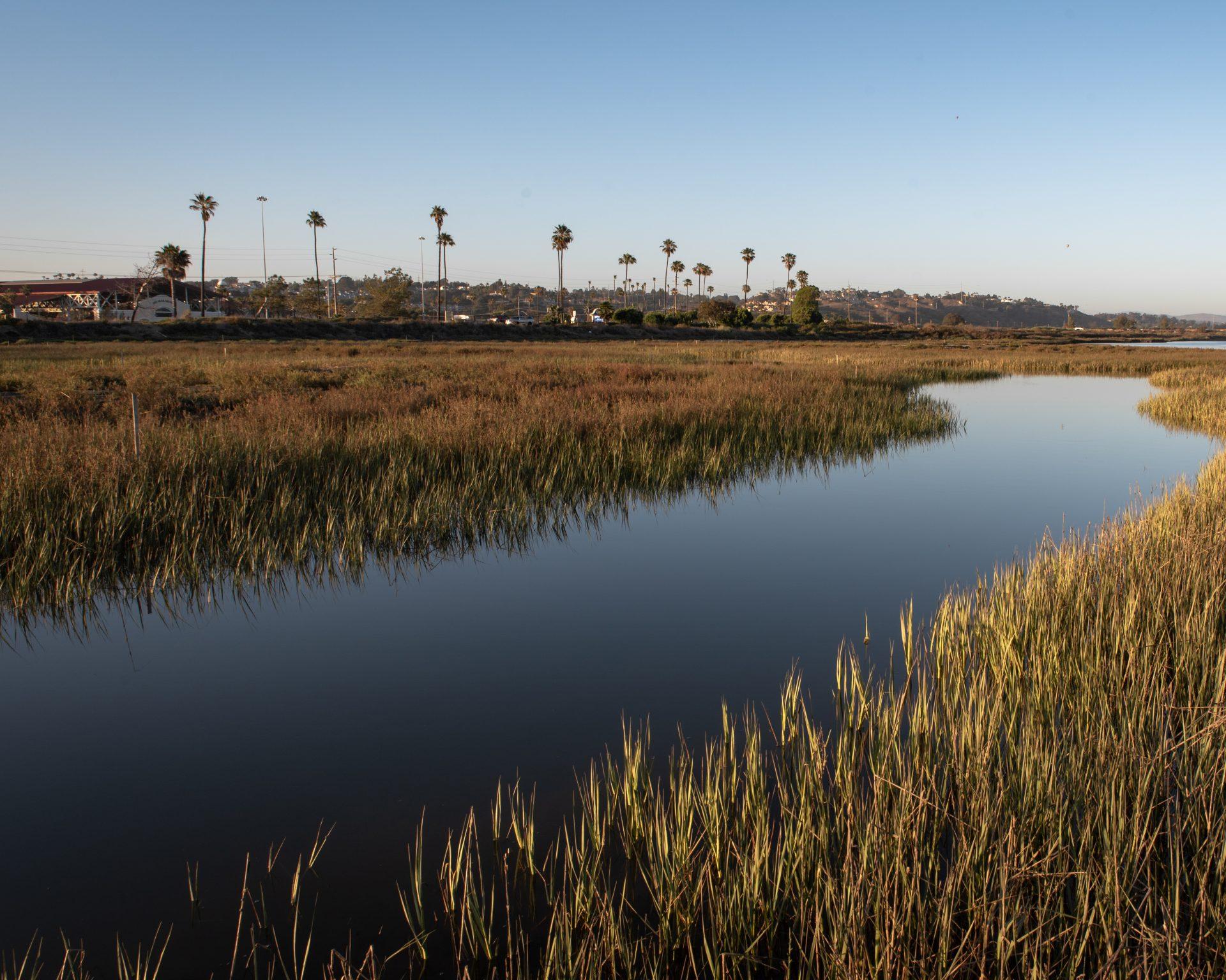 Del Mar Tidal Wetland - After