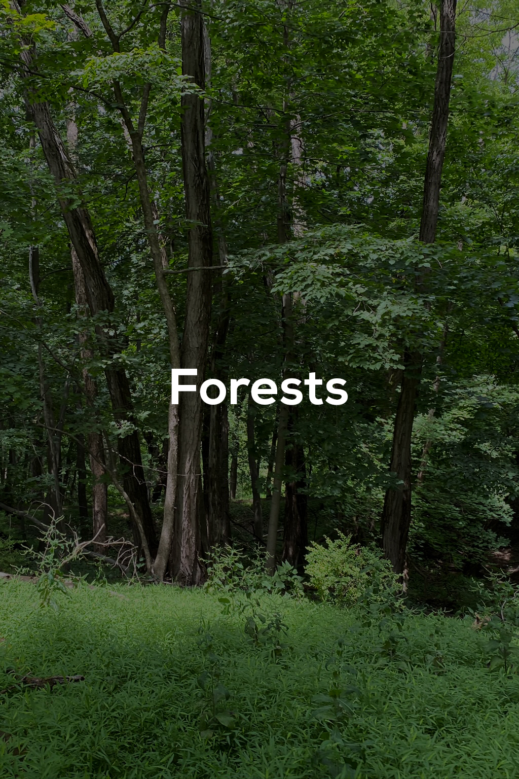 Forests - title