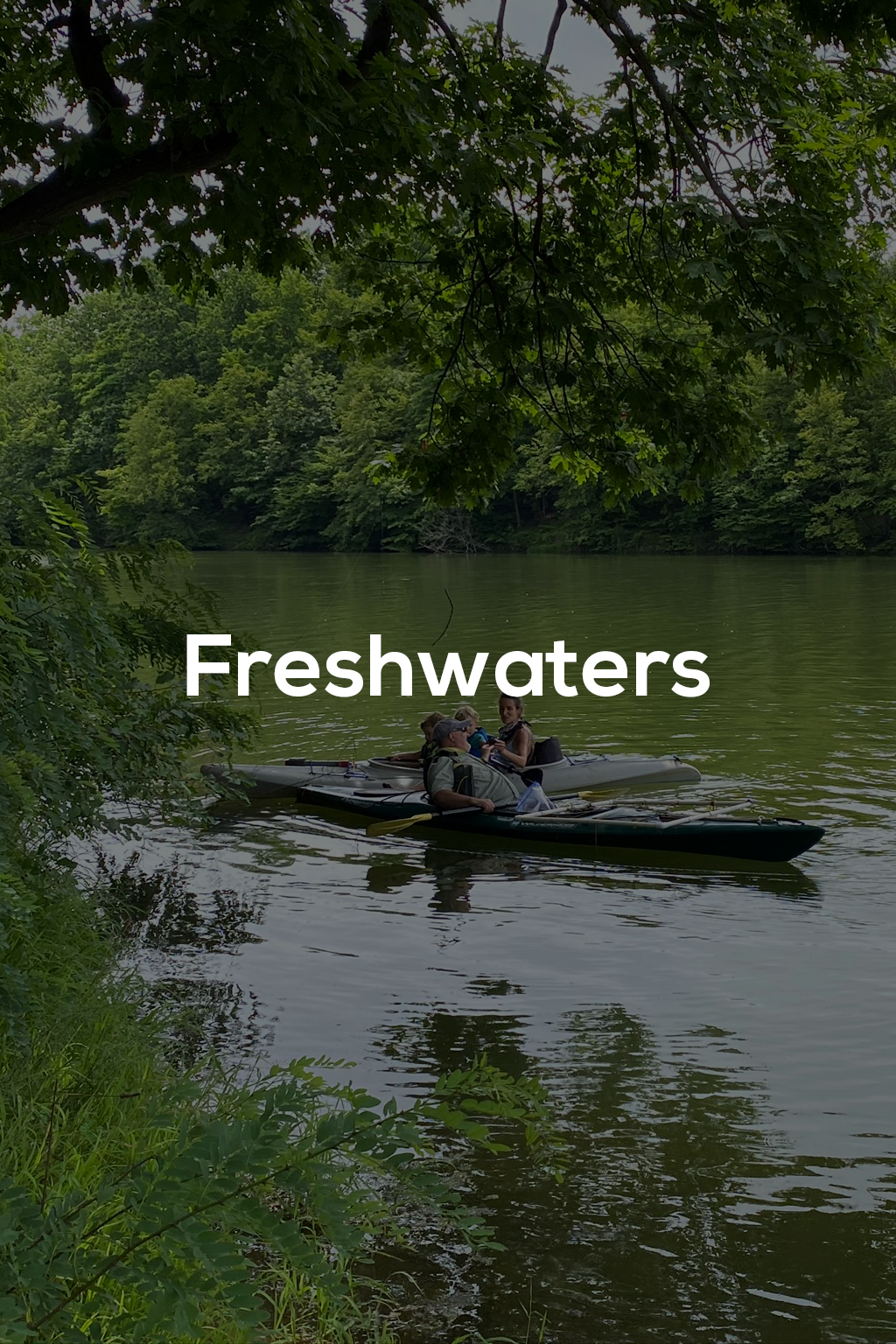 Freshwaters - title