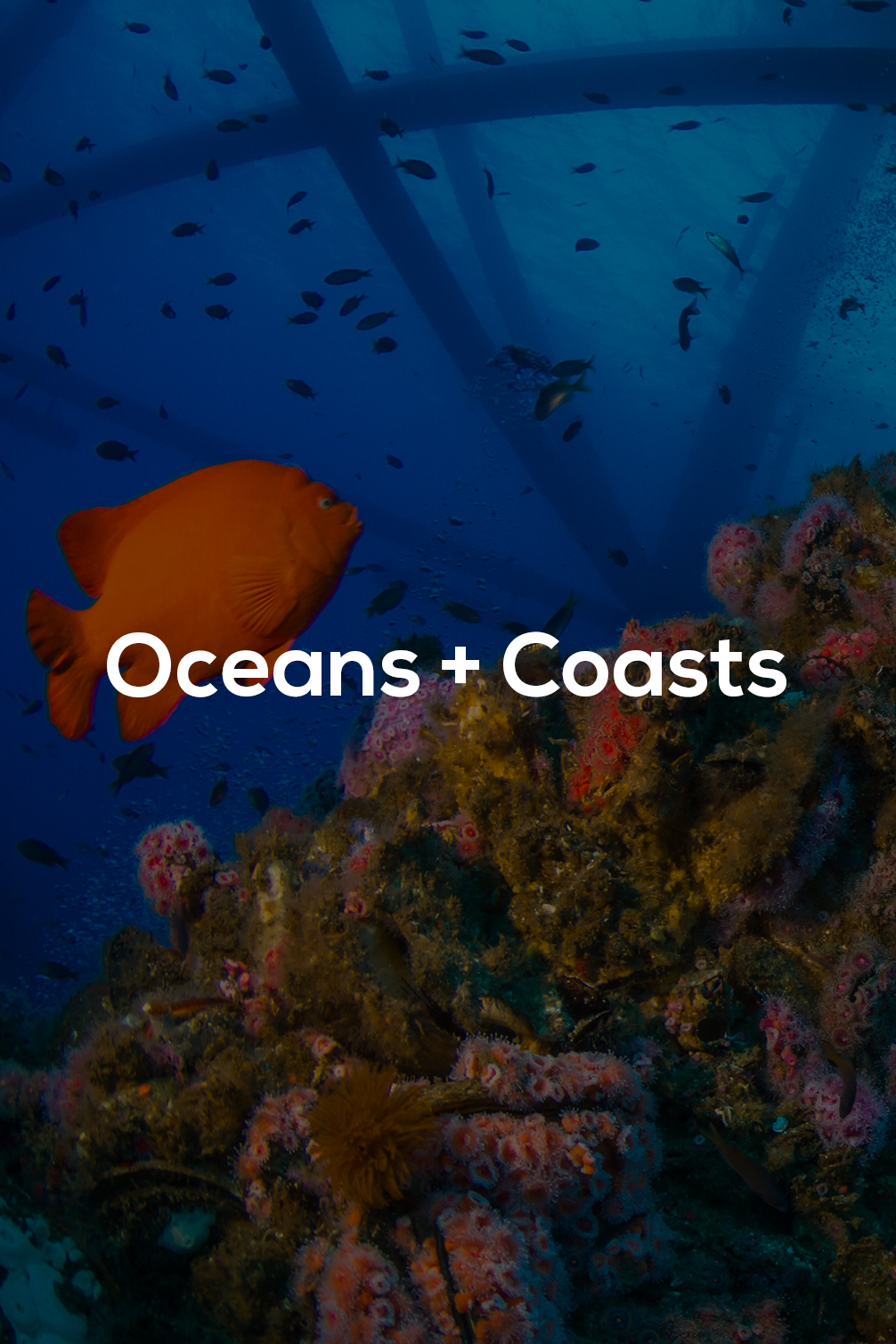 Oceans & Coasts - title