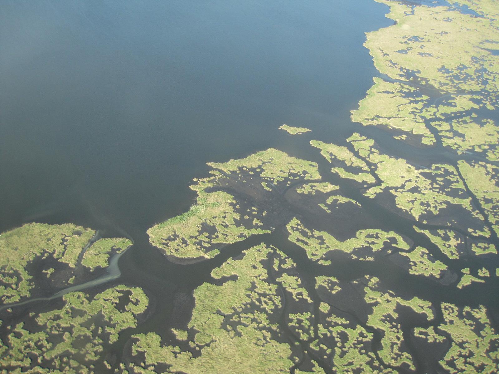 Gulf Coast wetlands oil spill