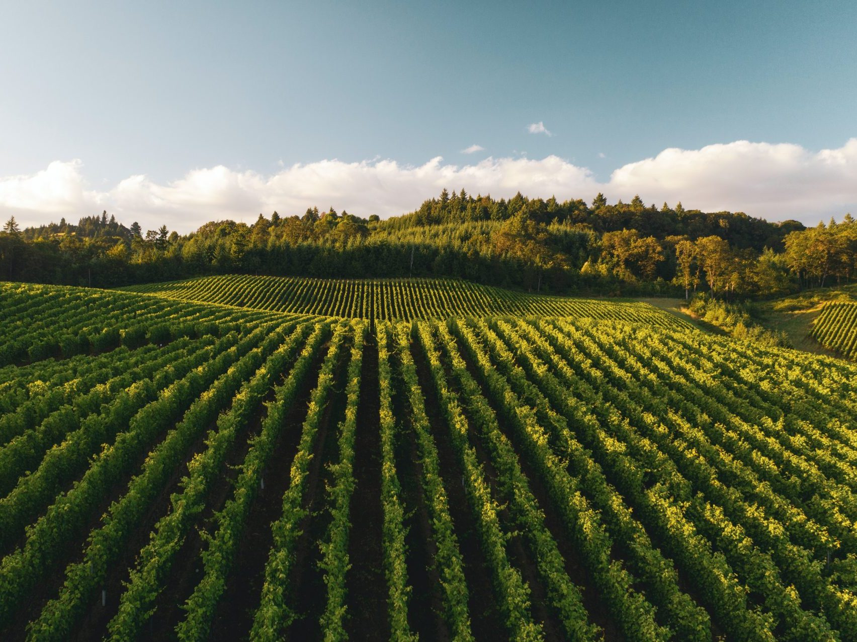 Organic & Regenerative Agriculture, a Primer