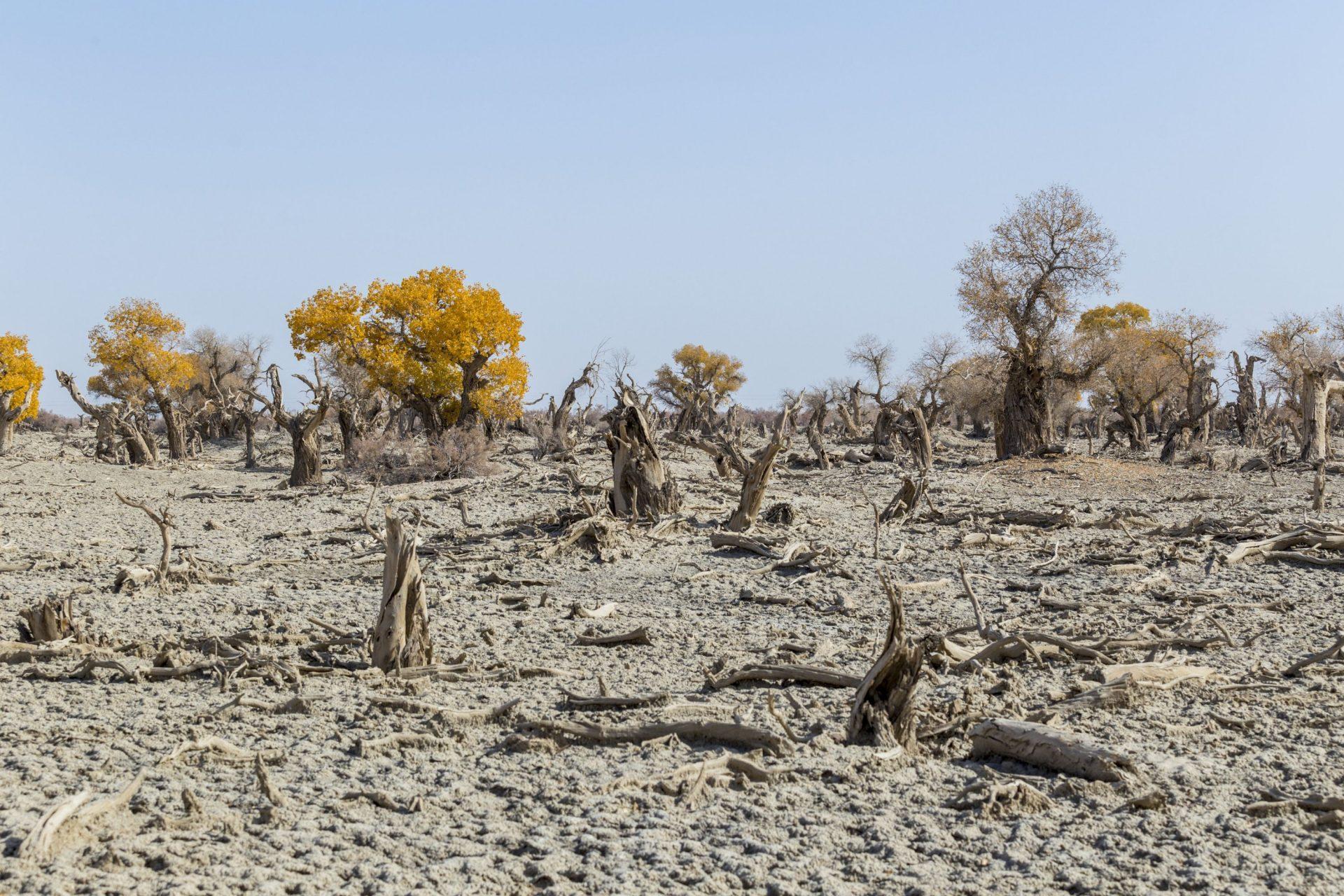 Drought photo